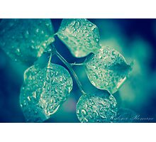 Shining Leaves  Photographic Print