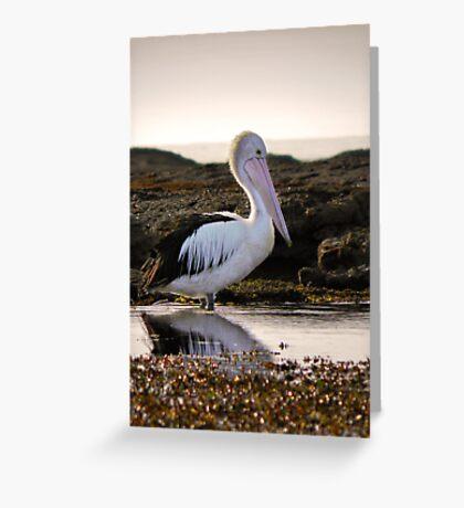 Pelican morning Greeting Card