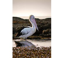 Pelican morning Photographic Print