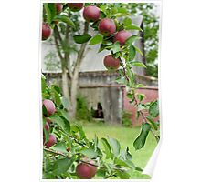 Old Orchard Barn Poster