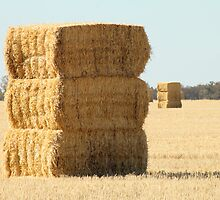 Needle in a Haystack by Jane McDougall