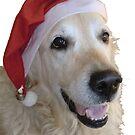 Merry Christmas! by Nicole Zeug