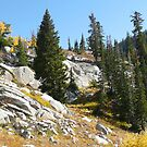 Autumn Pines on the Rocks by BrianAShaw