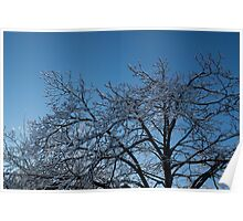 Toronto Ice Storm 2013 - Shiny, Icy Tree Branches Poster