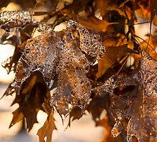 Toronto Ice Storm 2013 - Honey Colored Honeycomb Ice by Georgia Mizuleva