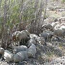 Sheep Huddle by BrianAShaw