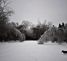 Ice storm by lumiwa