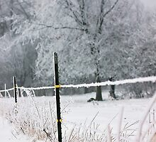 Frosty Fence by AbigailJoy