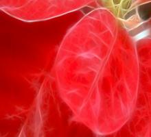 Mottled Red Poinsettia 1 Ephemeral Happy Holidays S2F1 Sticker