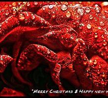 Christmas card by Zohaib Ali