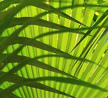 Palm Frond Layers  by Roupen  Baker