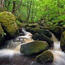 Padley Gorge by Steve  Liptrot