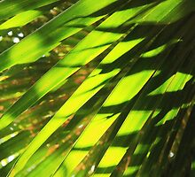Palm Fronds Pattern by Roupen  Baker