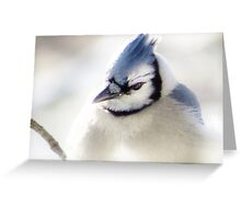 Winter Blues & Grays Greeting Card