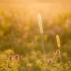 Lucerne flowers & Grass-sticks by Mauds