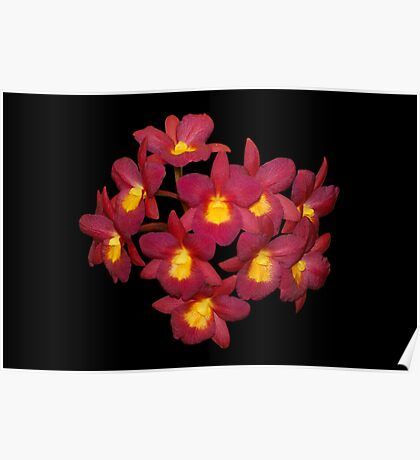 Red Orchids Natural Poster