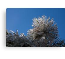 Toronto Ice Storm 2013 - Pine Needle Flower Canvas Print