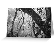 Tree V Greeting Card