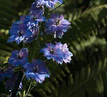 Larkspurs and Ferns - a Lush Summer Garden by Georgia Mizuleva