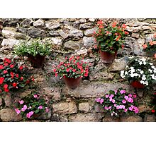 assorted flowers on stone wall Photographic Print