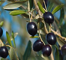 Fresh organic Olives. by jhawa