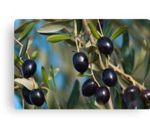 Fresh organic Olives. Canvas Print