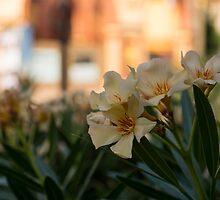 Oleander in Warm, Rich Mediterranean Oranges and Yellows by Georgia Mizuleva