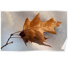 Oak leaf in snow Poster