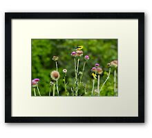 Who's looking at who Framed Print