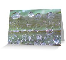 Waterdrops on green grass Greeting Card