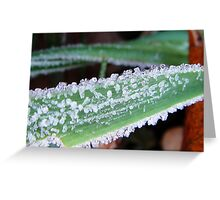 White frost on a green grass Greeting Card