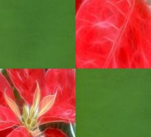 Mottled Red Poinsettia 1 Ephemeral Merry Christmas Q5F1 Sticker