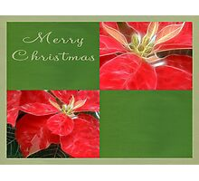 Mottled Red Poinsettia 1 Ephemeral Merry Christmas Q5F1 Photographic Print