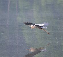 The Elusive Blue Heron by Jens  Larsen