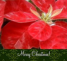 Mottled Red Poinsettia 1 Ephemeral Merry Christmas S6F1 by Christopher Johnson