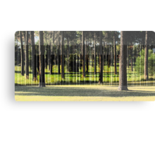 A Stand of Pines Canvas Print
