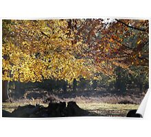 autum trees  Poster