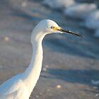Snowy Egret by Bob Hardy