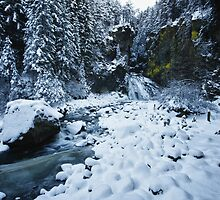 Winter scene snow in the forests and frozen creek of the Alps - color - Il Sangue dell'Inverno by visionitaliane