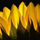 sunflower glow by Sunshinesmile83