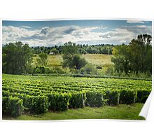 Afternoon in a Vineyard Poster