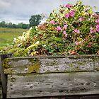 Flower Bed by Johanne Brunet