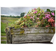 Flower Bed Poster