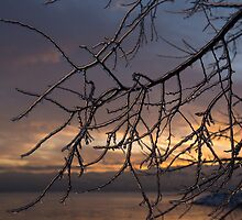 Toronto Ice Storm 2013 - a Sunrise Through the Icy Branches by Georgia Mizuleva