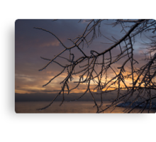 A Sunrise Through the Icy Branches Canvas Print