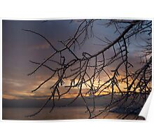 A Sunrise Through the Icy Branches Poster