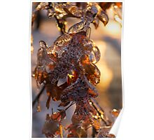 Ice Storm 2013 - Oak Leaves Jewelry Poster