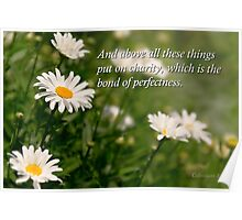 Inspirational - Daisy - Colossians 3-14 Poster