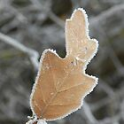 Frosty December Morning 9 by Marijane  Moyer