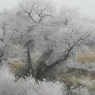 Frosty December Morning 11 by Marijane  Moyer